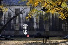 霜降秋季二十四节气落叶图