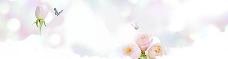玫瑰花banner背景图