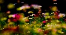 有朦胧美的花丛图片