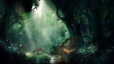 神秘梦幻森林