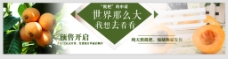 枇杷节淘宝banner