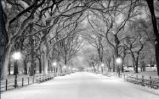 雪天风景黑白摄影图片