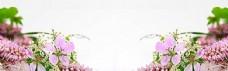 自然风景花瓣淘宝海报背景