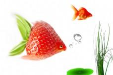 草莓金鱼 创意