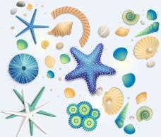 海星海洋生物高清大圖圖片