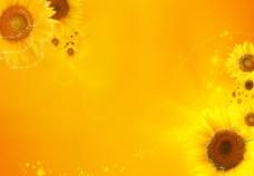 向日葵图片