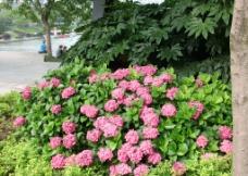 绿叶红花摄影图片