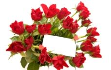 一束红色玫瑰图片