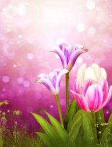 紫色郁金香壁画