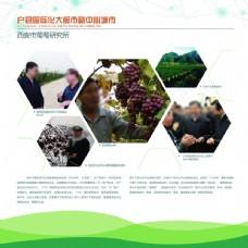 农业广告 农产品  葡萄 蔬菜 水果农业
