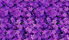 紫色花朵背景填充图案