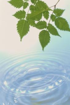 绿叶和水波纹