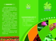 花卉宣传折页图片