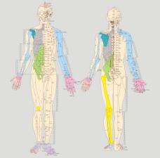 人体经络图