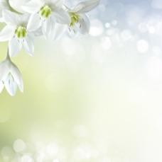 清新花朵背景图片