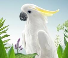 花鸟背景素材