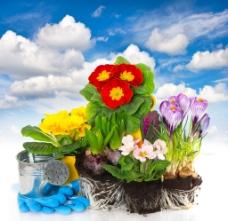 高清花朵盆栽图片