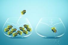 跳跃的鱼摄影