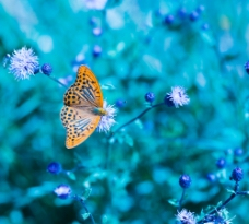 蝴蝶鲜花背景