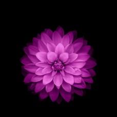 紫色花朵模板