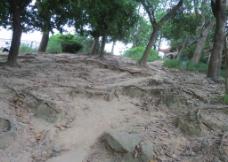 泥泞的小路图片
