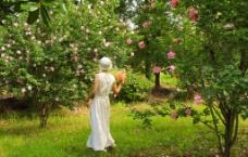 梦中花园图片