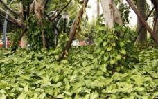 绿色植被图片
