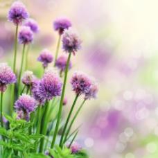 紫色小花闪烁背景