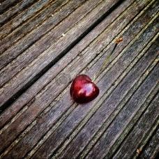 夏季水果红樱桃