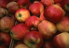 苹果摄影图片素材