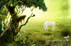 枯树藤与白马