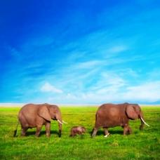 大象一家三口