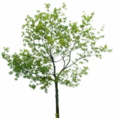 夏季树木 带通道TIFF图图片