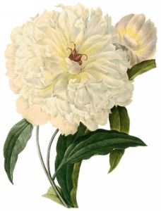 手绘植物花朵