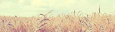 小麦banner创意设计