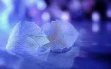 高清1920叶脉叶子紫色蓝色唯美背景图片