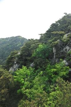 森林植被图片