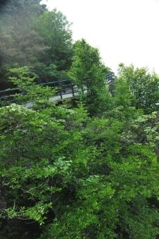 深林植被图片