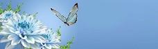 鲜花与蝴蝶banner背景图