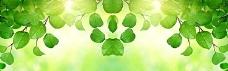 清新绿叶淘宝海报
