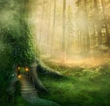 丛林深处图片