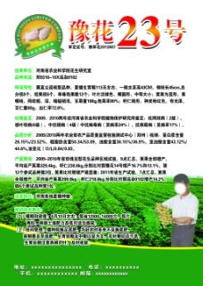 豫花23号海报