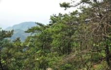山景 森林植被图片