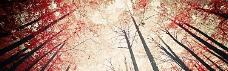 唯美秋天枫叶