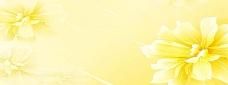 黄色花朵背景