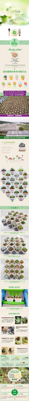 多肉植物详情