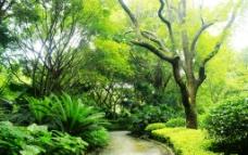 园林小路图片
