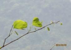 新绿叶图片
