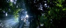中午森林视频