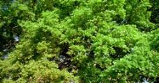 树的四季变化